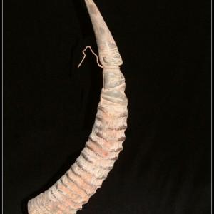 Spring Buck horn